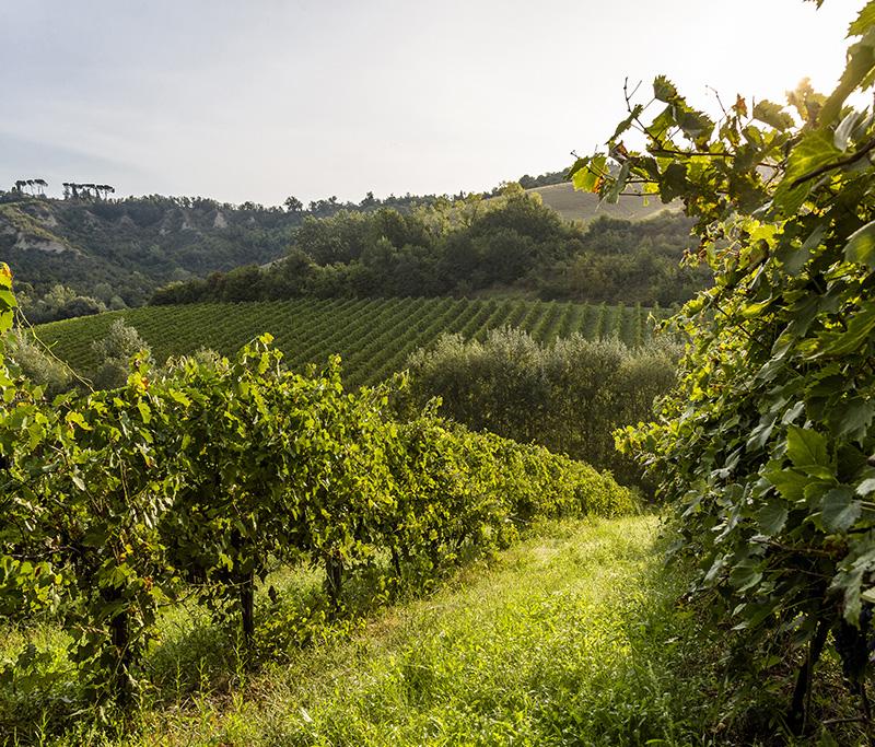 paesaggio_la-quercia-di-lotta-vecchia-riolo-terme-imola